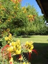 Alquiler temporario de cabaña en Tunuyan colonia las rosas