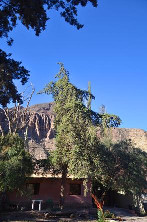 Alquiler temporario de cabaña en Purmamarca