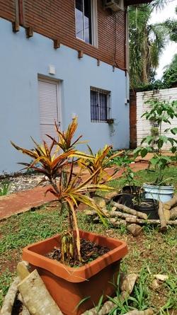 Alquiler temporario de departamento en Puerto iguazú
